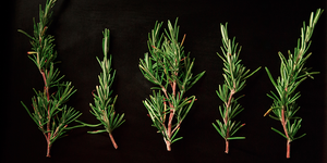 Rosemary for Digestion