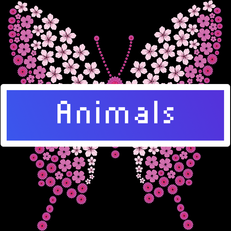 animals Category Title Card