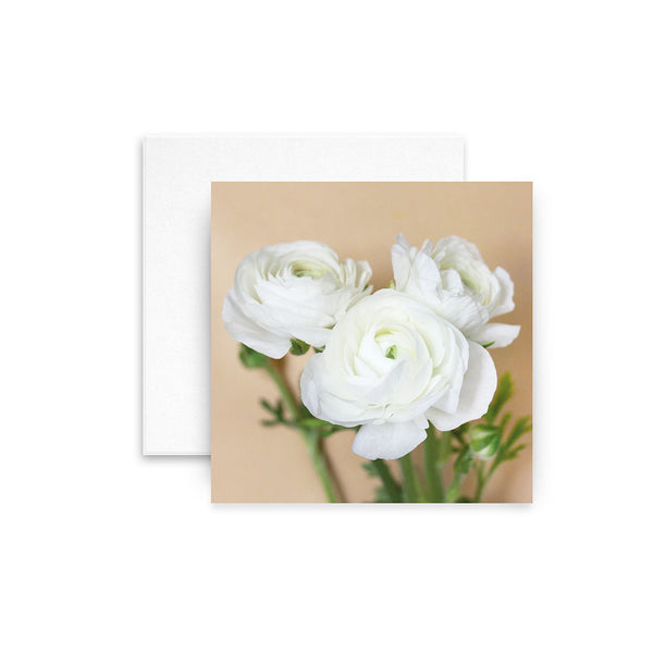 White Ranunculus (New design)
