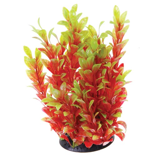 Underwater Treasures Red Ludwigia