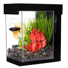 Load image into Gallery viewer, Marina Betta Style Aquarium - Black - 3.7 L (1 US gal)- In Store Pick-Up Only