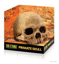Load image into Gallery viewer, EXO TERRA Primate Skull