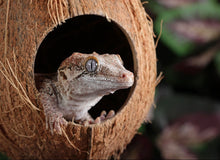 Load image into Gallery viewer, Pangea Hanging Coconut Reptile Hide