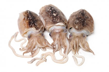 Sliced Cuttlefish 鱿鱼