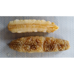 Golden Sea Cucumber 金参 (L) (2-3 pcs) 1Kg