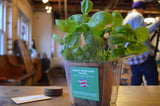 Basil Grow Kit
