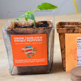 Ghost Pepper Plant Kit