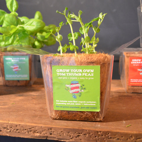 Tom Thumb Peas Grow Kit