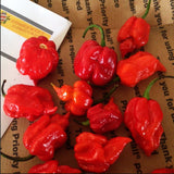 Fresh Moruga Scorpion Peppers