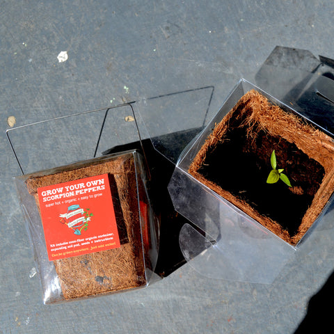 Scorpion Pepper Grow Kit