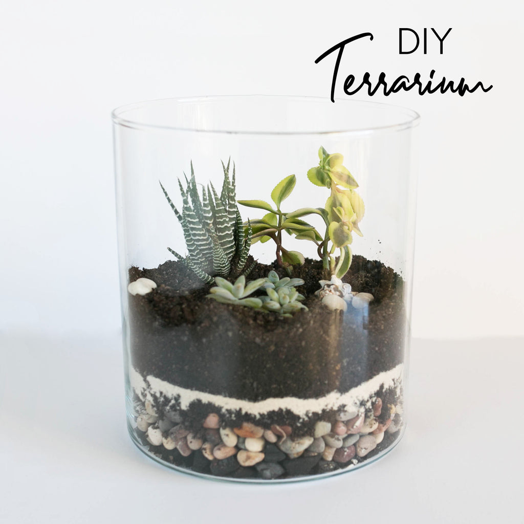 DIY Super Easy Terrarium