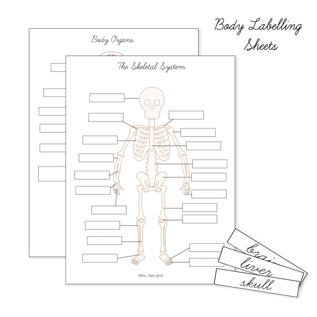 Body Labelling Sheets
