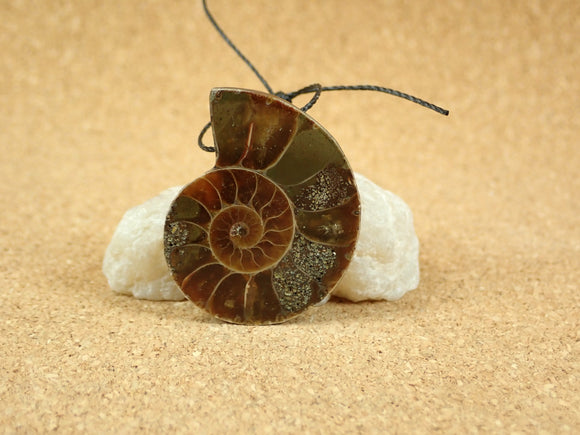 Ammonite Shell Focal Pendant