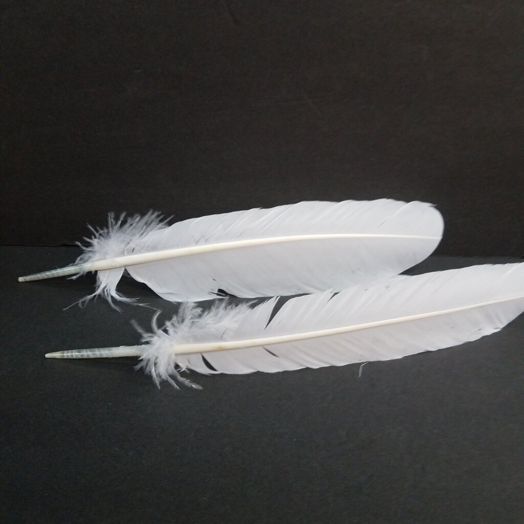 "10-12"" Turkey White Feather"
