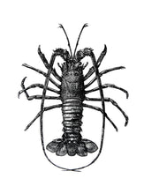 Load image into Gallery viewer, Spiny-lobster Print