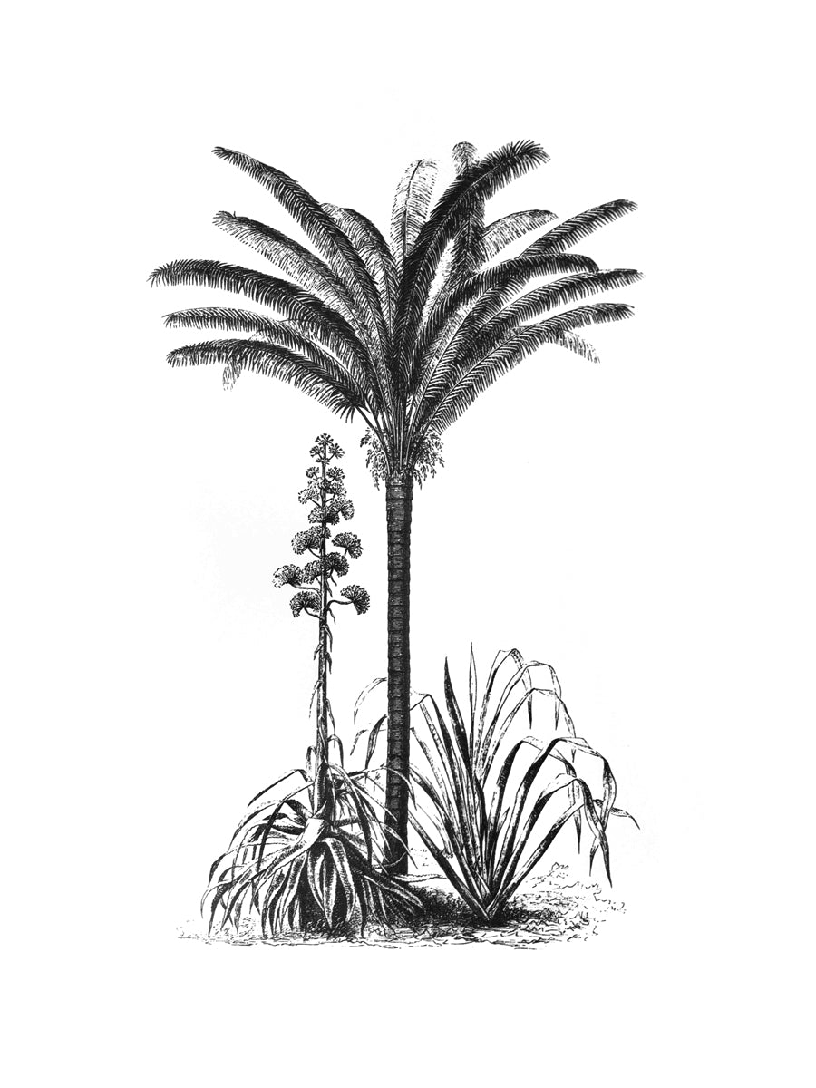 palms botanic vintage 1800s biology books siebdruck screen-print handdruck