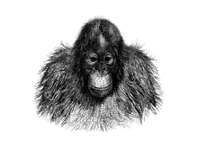 Load image into Gallery viewer, orangutan monkeys primate zoology vintage woodcarving 1800s siebdruck screen-print handdruck jane-goodall