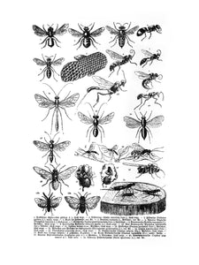 Various-Insects-2 Print