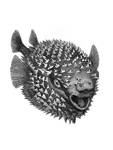 blowfish fish zoology marine biology 1800s woodcarving screen-print siebdruck handdruck