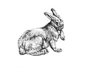 farm animal bunny rabbit woodcarving 1800s zoology books siebdruck handdruck screen-print