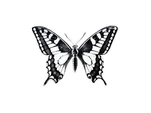 Butterfly-2 Print
