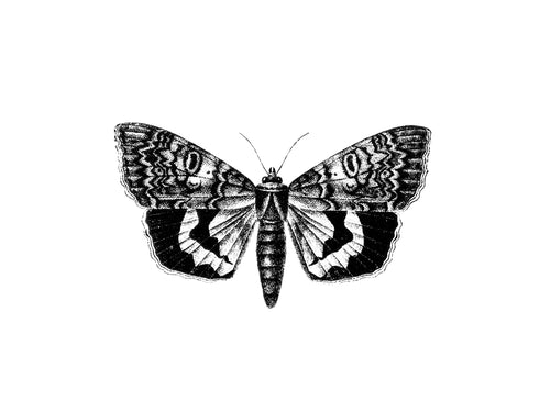 Butterfly-3 Print