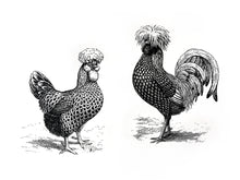 Load image into Gallery viewer, Chickens Print
