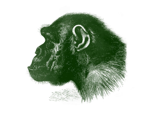 chimp chimpanzee monkeys primates zoology 1800s books siebdruck handdruck screen-print