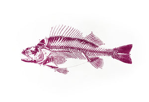 Fish Skeleton Print