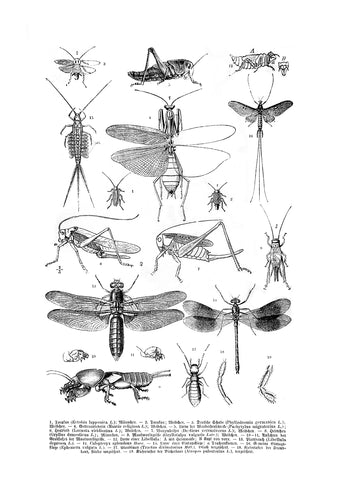 Various Insects Print