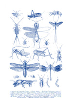 Load image into Gallery viewer, Various Insects Print