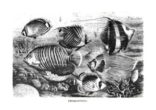 Load image into Gallery viewer, fishes vintage illustration woodcarving zoology siebdruck screen-print handdruck