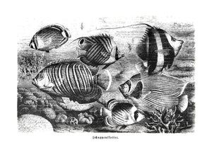 fishes vintage illustration woodcarving zoology siebdruck screen-print handdruck