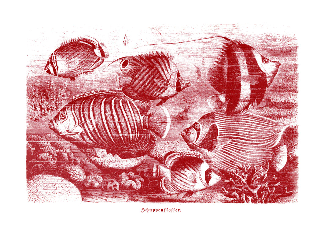 tuna fish vintage illustration woodcarving zoology siebdruck screen-print handdruck