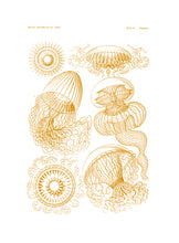 Load image into Gallery viewer, Jellyfishes Print