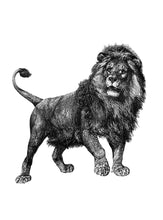 Load image into Gallery viewer, Cape Lion Print
