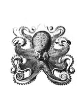 Load image into Gallery viewer, krake octopus zoology marine biology 1800s woodcarving screen-print siebdruck handdruck