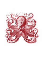 Load image into Gallery viewer, Octopus Print
