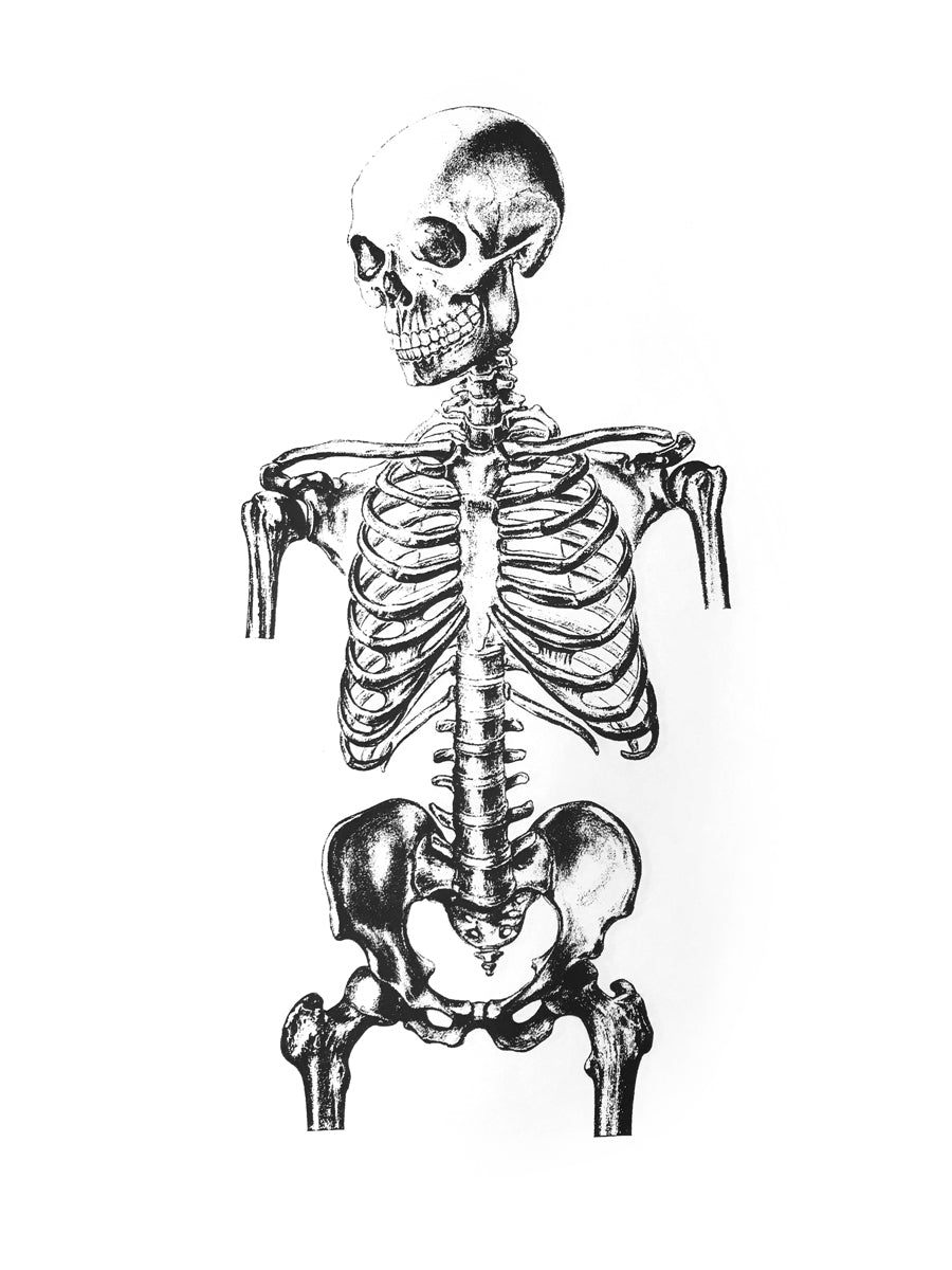 skelet human-body anatomy medicine illustration vintage siebdruck screen-print HQ