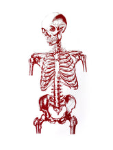 Load image into Gallery viewer, skelet human-body anatomy medicine illustration vintage siebdruck screen-print HQ