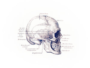 skull anatomy vintage books 1800s medicine siebdruck screenprint