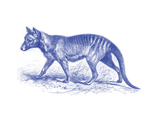 Load image into Gallery viewer, Tasmanian-Tiger Print