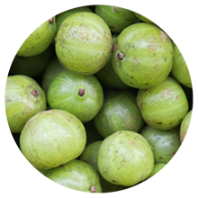 Golden Superfood Bliss contains Amla Fruit