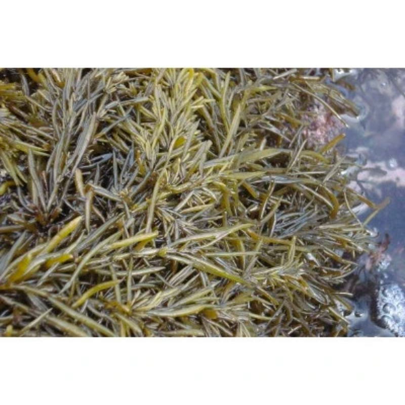 Korean Seaweed (Tot) for Rice 100g