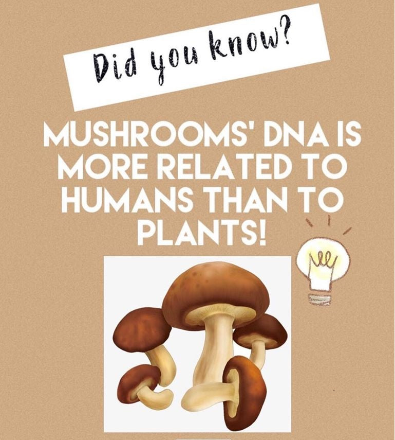 Mushrooms' DNA is more related to Humans than to Plants