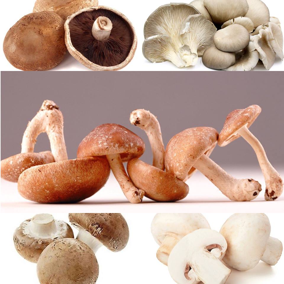 See 6 good reasons why we should eat Mushrooms
