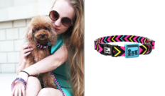 dog collars colorful