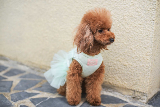 lovely dog dress