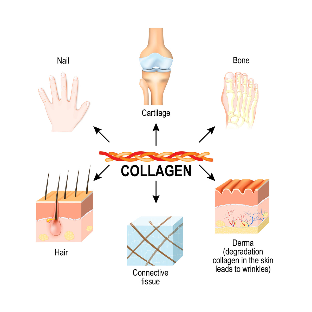 Collagen Fantastic! - Bioactive Type I and III New Zealand Grass Fed Bovine Collagen. - 24 oz. - 60 servings