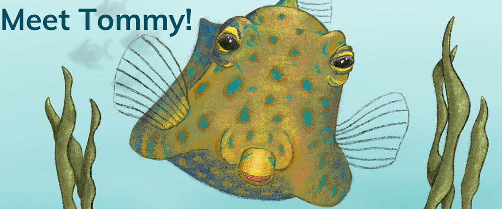 Meet Tommy the Thornback Cowfish!